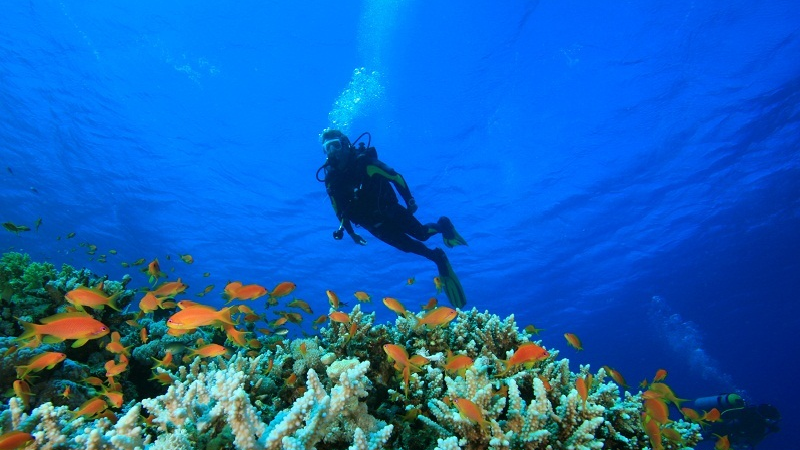 Scuba Diving And Water Sports At Grand Island Goa